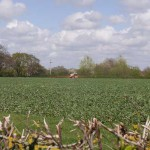 Field beans being sprayed April 2012