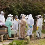 Stanmer apiary meeting, April 2015