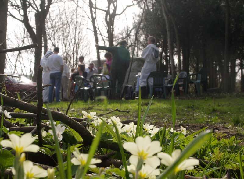 Tea among the primroses